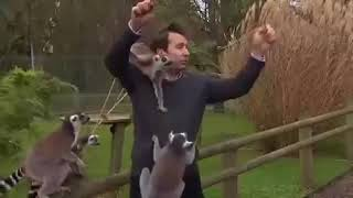 Video Extra: Reporter mobbed by lemurs