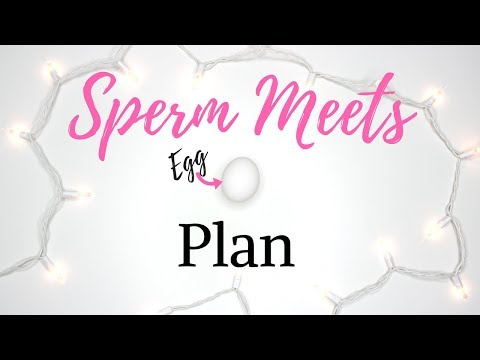 INCREASE CHANCES OF GETTING PREGNANT   SPERM Meets EGG Plan