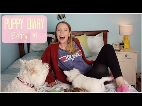 The Puppy Diary - Entry 1 | TheDogBlog