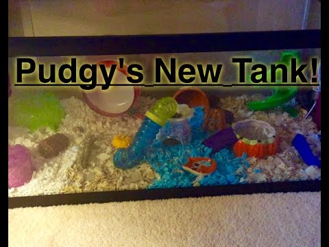 Pudgy's New Tank