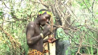 Hadzabe eating honey. The Hadzabe busmen collect honey from wild bees