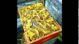 Honey |شاهد اكتشاف جبل في حضرموت اليمن لعسل النحل - قل سبحان الله