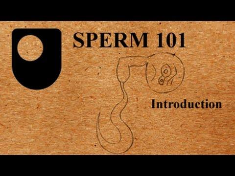 SPERM 101:  An Introduction (1/3)