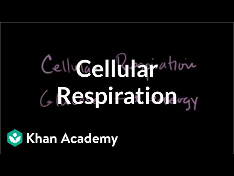 Introduction to cellular respiration | Cellular respiration | Biology | Khan Academy