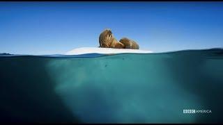 Planet Earth: Blue Planet II   Radiohead & Hans Zimmer - (ocean) bloom   BBC America