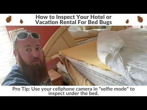 How to Look For Bed Bugs In a Hotel or Vacation Rental