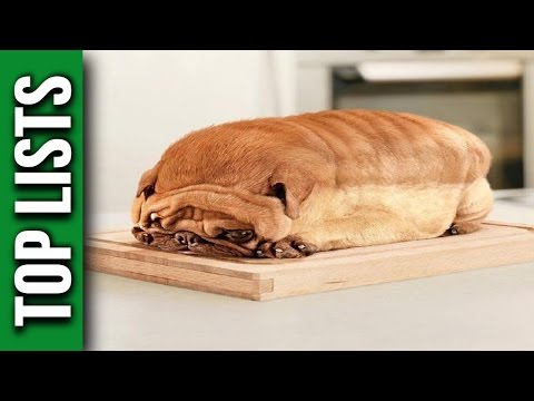 5 Most Obese Dogs Ever