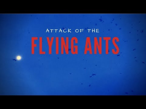 Attack of the Flying Ants