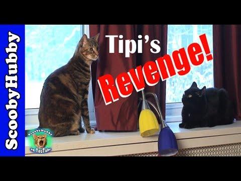 Tipi's Revenge -- Cat Clips #174