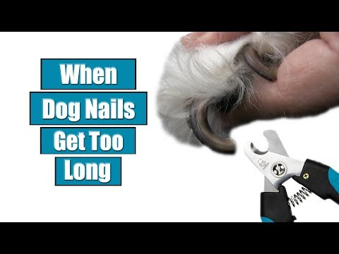 When Dog Nails Get Too Long