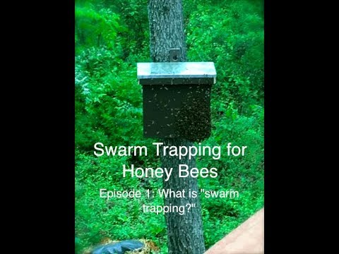 Episode 1: Swarm Trapping for Honey Bees - What is swarm trapping?