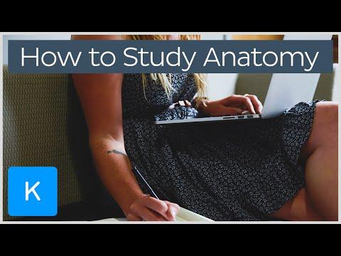 How to study for Human Anatomy |Kenhub