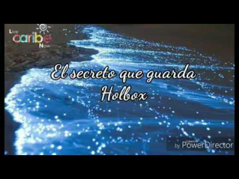 Tour Bioluminiscencia Holbox Cancún