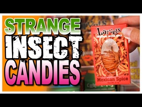 Strange Insect Candies at The Candy Shoppe