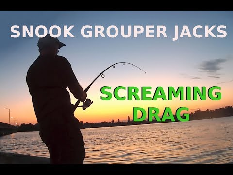 Fishing Artificial Bait Catching Snook Jacks Grouper on Lures