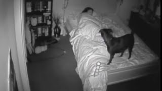 Download Paranormal Activity CCTV Bossy the Psychic Dog Sense Ghost Footage