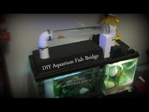 DIY Aquarium Fish Bridge