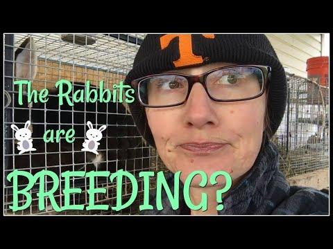 The Rabbits Are Breeding?