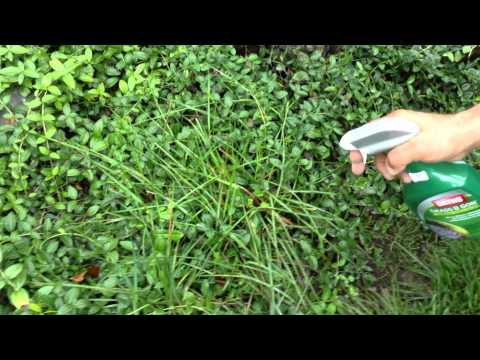 Landscaping Tips - How to kill grass and weeds