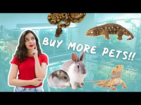 EXOTIC PETS - How Many Do I Have? Why I Don't Own Loads...