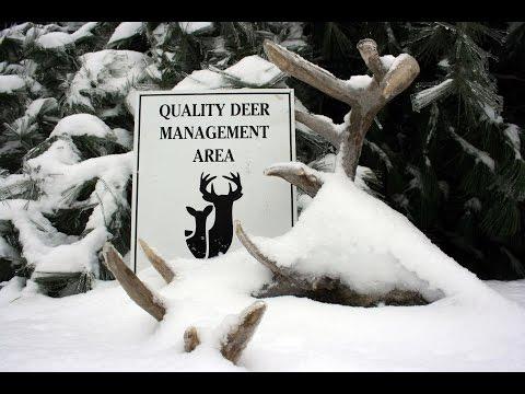 QDM Coops: QDMA Management Minute