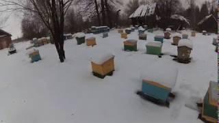 Зимовка пчел на сетчятом дне в Кировской области