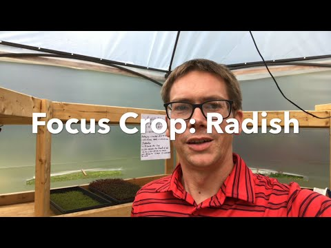 Are Microgreens a Profitable Crop?