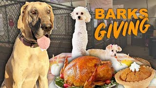 Shelter dogs first Thanksgiving! Amazing Reaction 😍