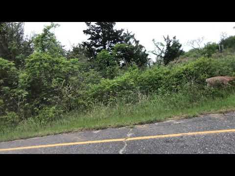 Deer attacks weed