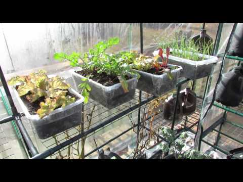 Part 5 of 5: Greenhouse Progress, Planting, Production and Picking - The Rusted Garden 2013