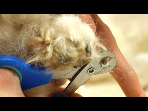 Grooming Guide - How to cut dog nails