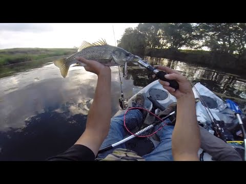 Surface Fishing For Australian Bass On Dragon Kayaks