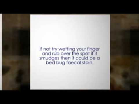 How to inspect a hotel room for bed bugs.
