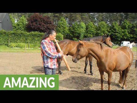Man captivates horses with native flute