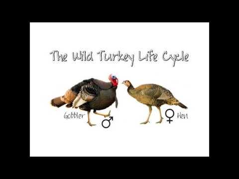 Ontario Wild Turkey Course