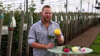 Elite Flower, Jacob Mccall 1