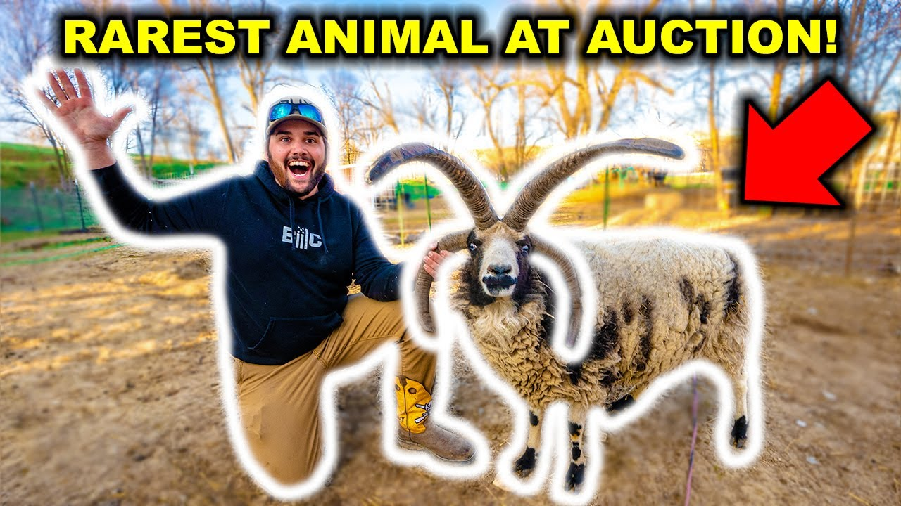 I Bought the RAREST Animal at the EXOTIC AUCTION!!! (Big Mistake?)