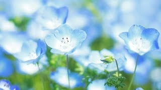"Peaceful Music, Relaxing Music, Instrumental Music ""Beautiful World Japan"" by Tim Janis"
