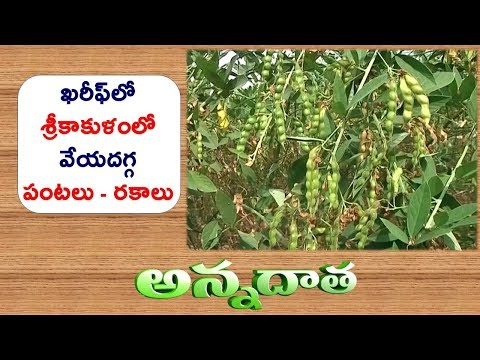 Kharif Crops for Srikakulam || ETV Annadata