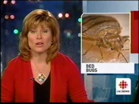 Bed bugs invading Winnipeg in public places