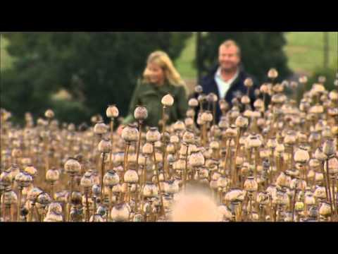 Ellie Harrison Medicinal Herbs & Secret Opium Poppy Fields In England