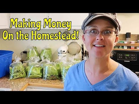 A GREAT SELLER at the Farmer's Market! Making Money on the Homestead