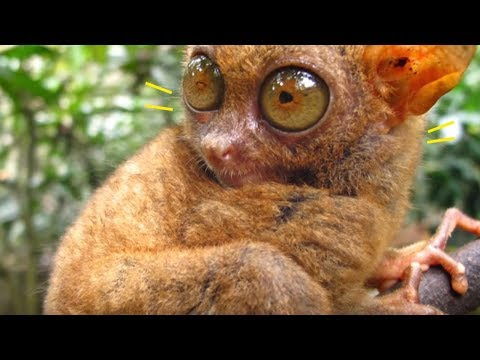 5 Animals That Came Back From Extinction!