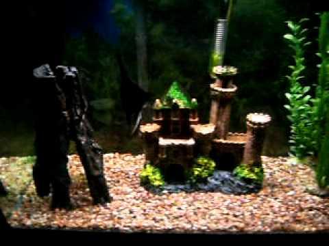 An Introduction to my aquarium blogs