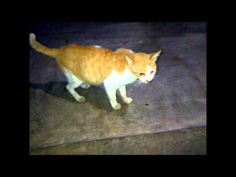 poor pregnant stray cat