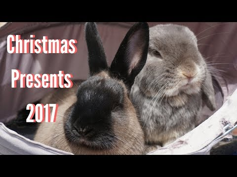 Rabbit Christmas Presents 2017