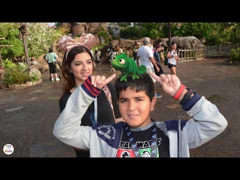 Disney's Animal Kingdom Disney World Tips And Pandora Avatar Flight Of Passage