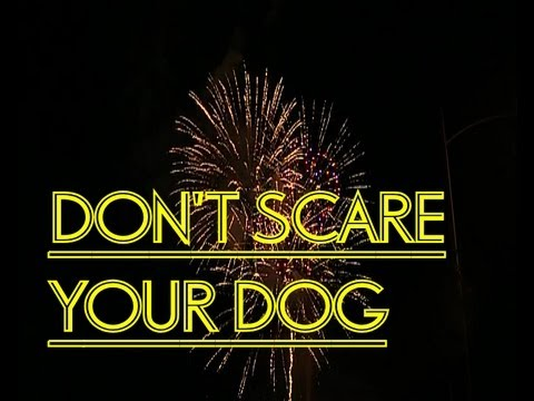 How to stop your dog freaking out during the fireworks.