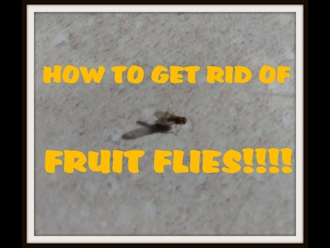 How to get rid of Fruit Flies QUICK EASY SIMPLE WORKS Trick Tips with Vinegar & Dish Soap