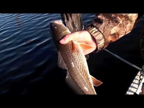 Inshore Fishing Jacksonville Florida for Redfish and Flounder